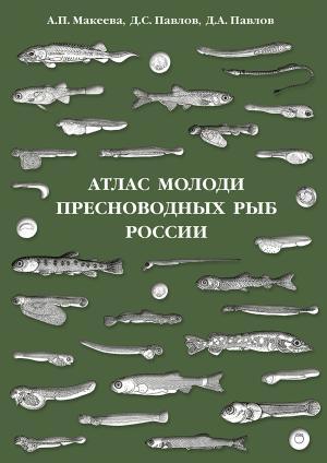 Атлас молоди пресноводных рыб России photo №1
