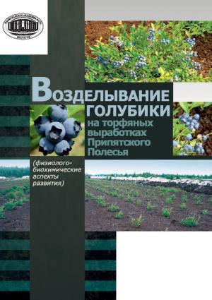 Возделывание голубики на торфяных выработках Припятского Полесья Foto №1