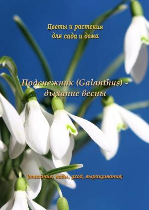 Подснежник (Galanthus) – дыхание весны Foto №1