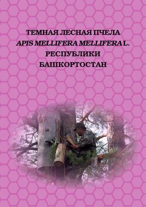 Темная лесная пчела (Apis mellifera mellifera L.) Республики Башкортостан photo №1