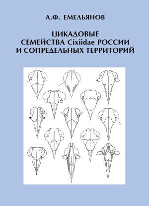 Цикадовые семейства Cixiidae России и сопредельных территорий photo №1