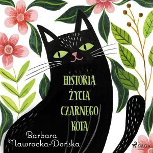 Historia zycia czarnego kota photo №1