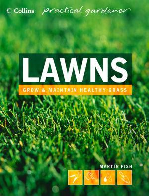 Lawns photo №1