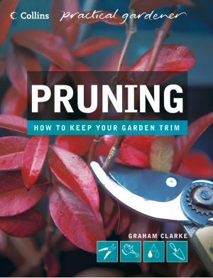 Pruning photo №1