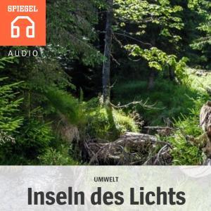Umwelt: Inseln des Lichts Foto №1