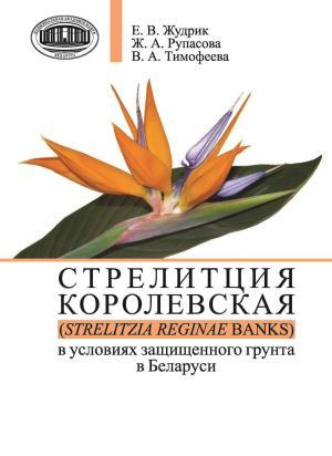 Стрелитция королевская (Strelitzia reginae Banks) в условиях защищенного грунта в Беларуси photo №1