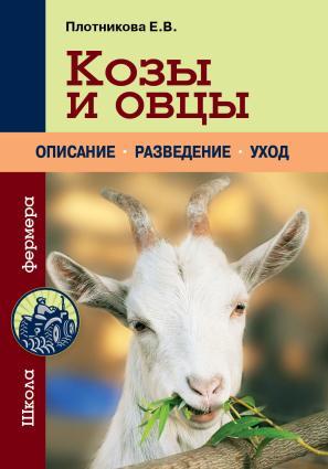 Козы и овцы photo №1