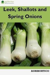 Leek, Shallots and Spring Onions photo №1