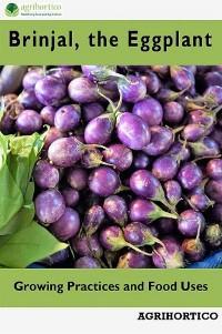 Brinjals, the Eggplant photo №1