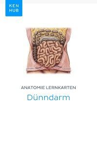 Anatomie Lernkarten: Dünndarm photo №1